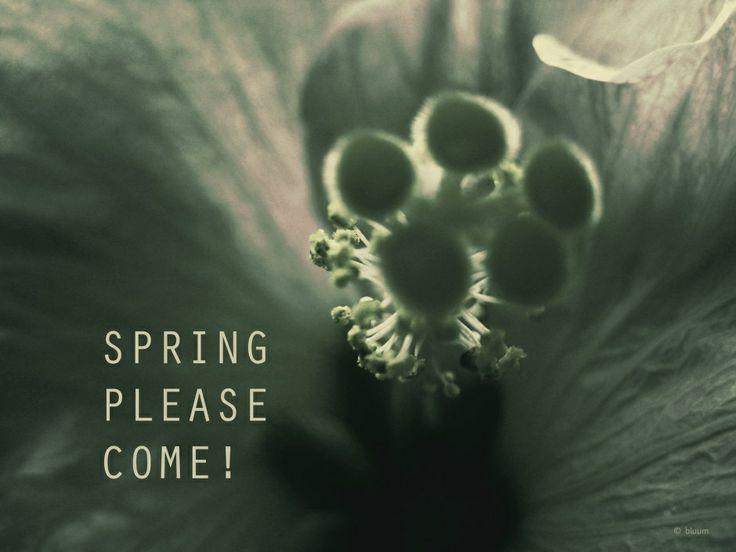 spring, please come!