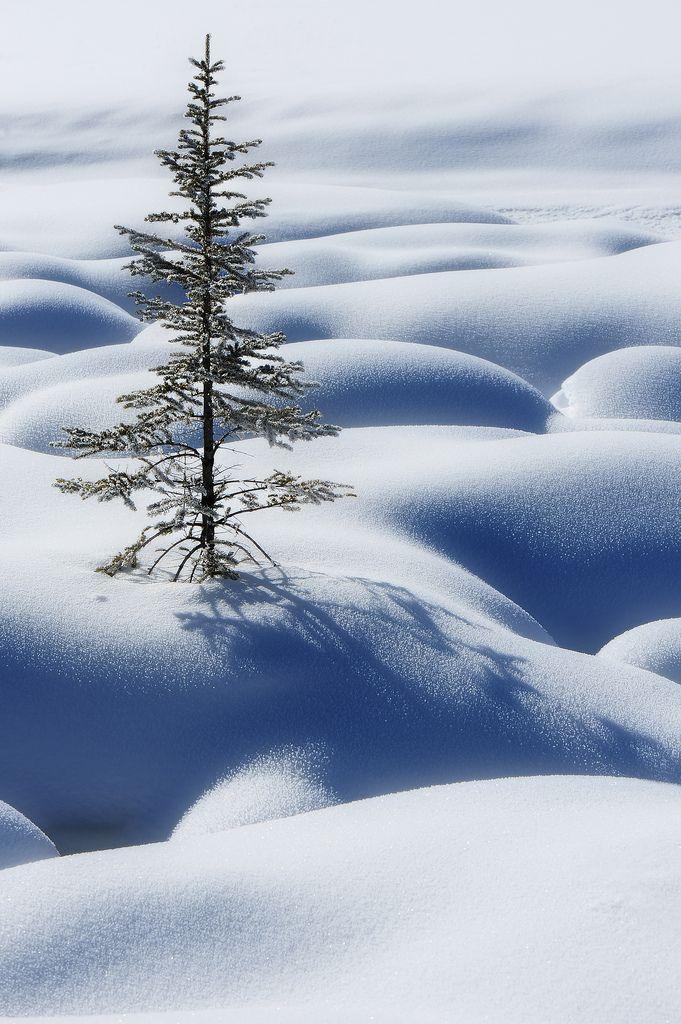 Lone tree in snow, Jasper, Canada, by Victor Liu Photography,