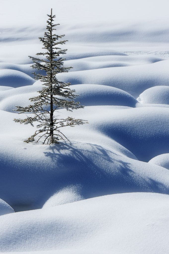 Lone tree in snow, Jasper, Canada, by Victor Liu Photography,