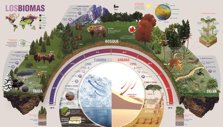 Mega - Info-graphic project for Design II (Salomone, FADU - UBA). Side 2 (Back of Water cycle).