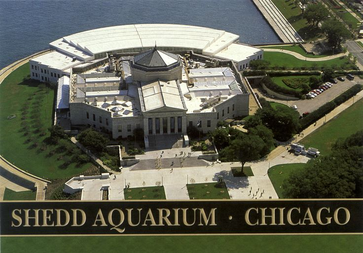 Shedd aquarium. Chicago, Illinois.