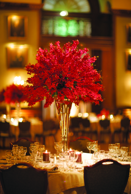Best red flowers ideas on pinterest color