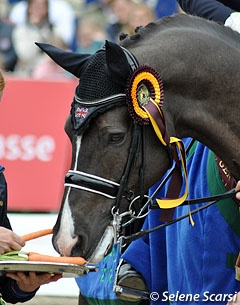 Valegro in Hagen with his silver tray of carrots, April, 2012.  He and rider Charlotte Dujardin set new world record score of 88.002. Passed Totilas and Edward Gal's 2010 record of 86.46.