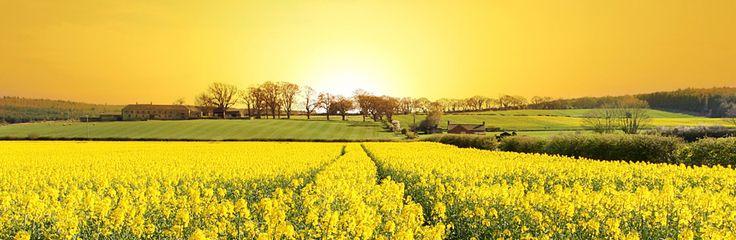 flores do jardim kboing : flores do jardim kboing:1000 ideias sobre Gerald Hüther no Pinterest