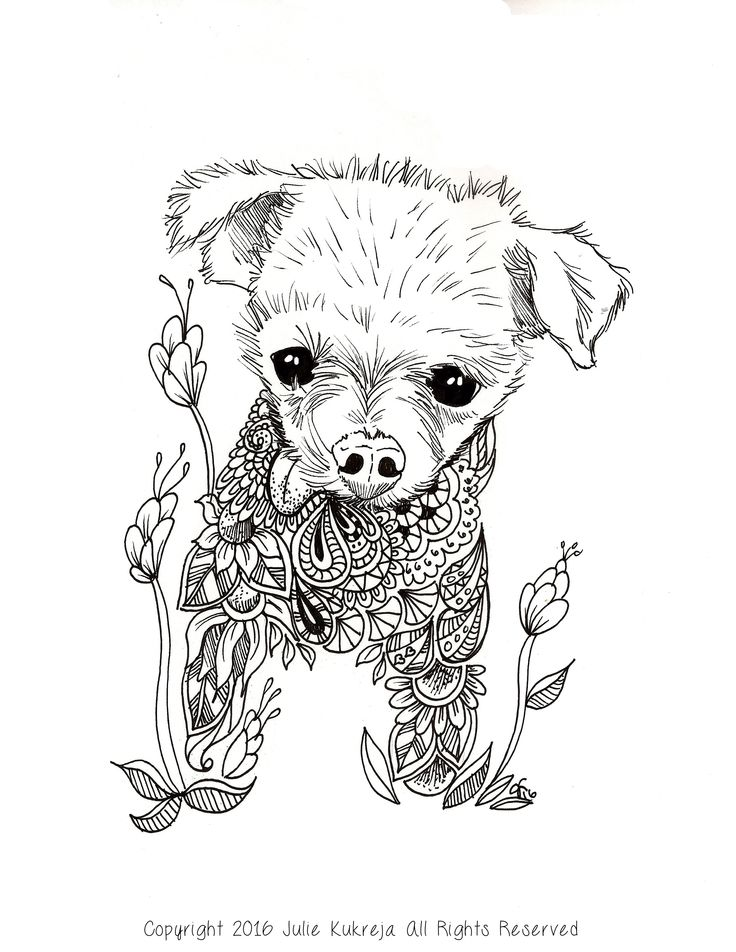 12 best Custom Coloring Book Pet Portraits images on ...
