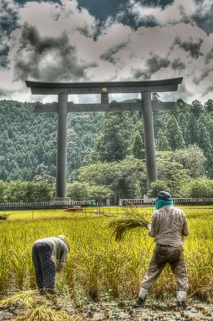 Harvesting in Wakayama, Japan