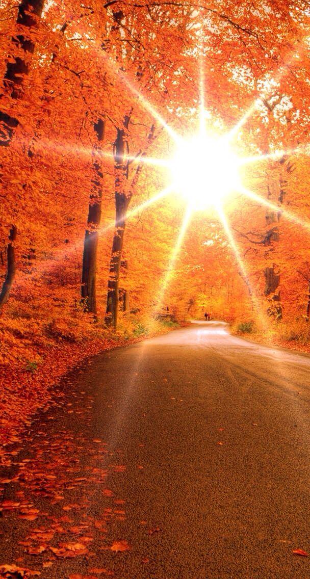 Healing Pathways: Autumn Series