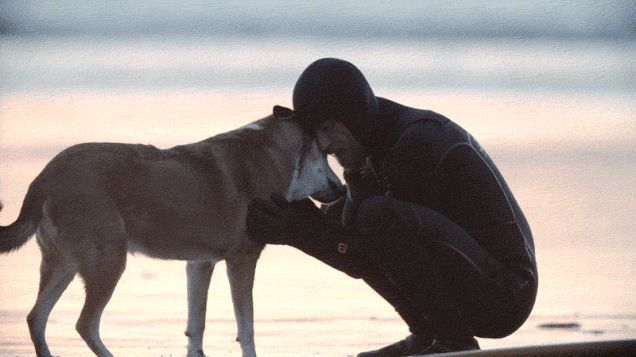 Don't Watch This Film About A Dog Unless You Want To Cry