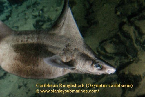 Caribbean Sea Creatures: 1393 Best Images About Just Sea Creatures On Pinterest
