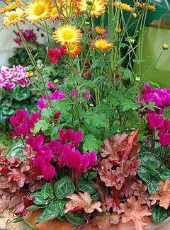 Chrysanthème, heuchères et cyclamens - F. Marre - Rustica