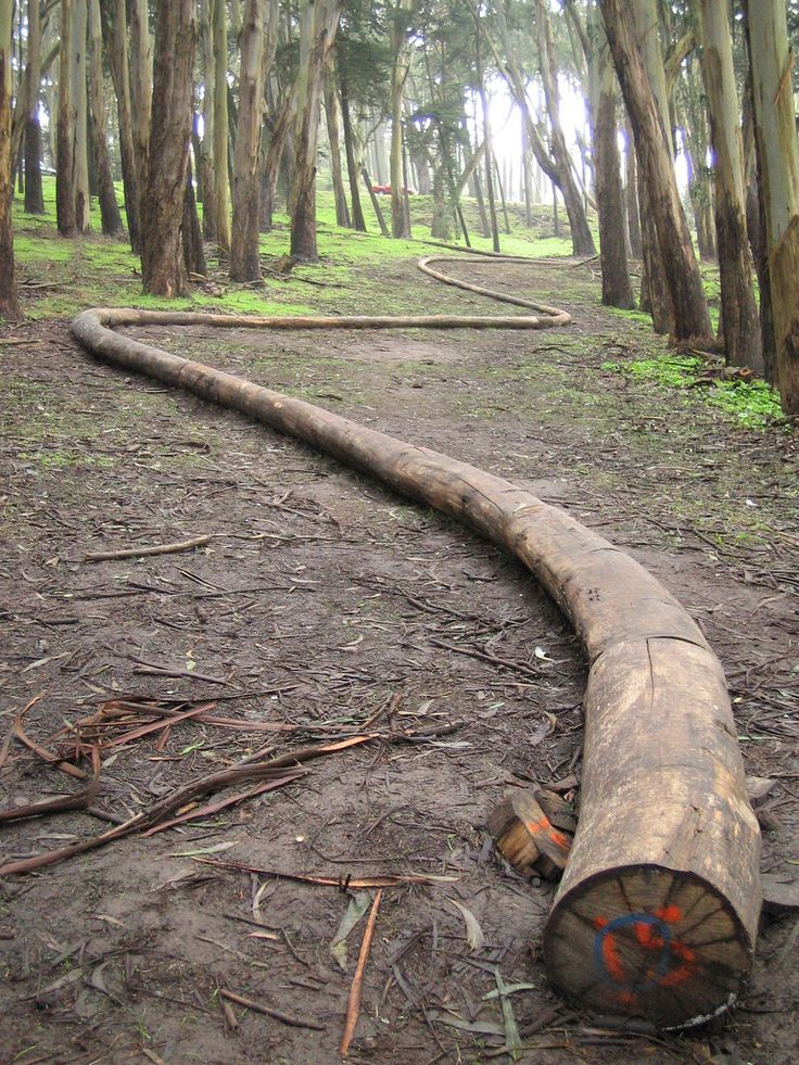 Wood Line by Andy Goldsworthy