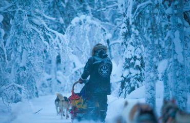 Husky Expedition, 7 Days, Polar, Finland