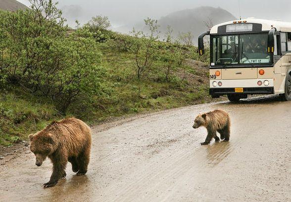 Denali Park Road   Best Alaska Wildlife Viewing Experiences
