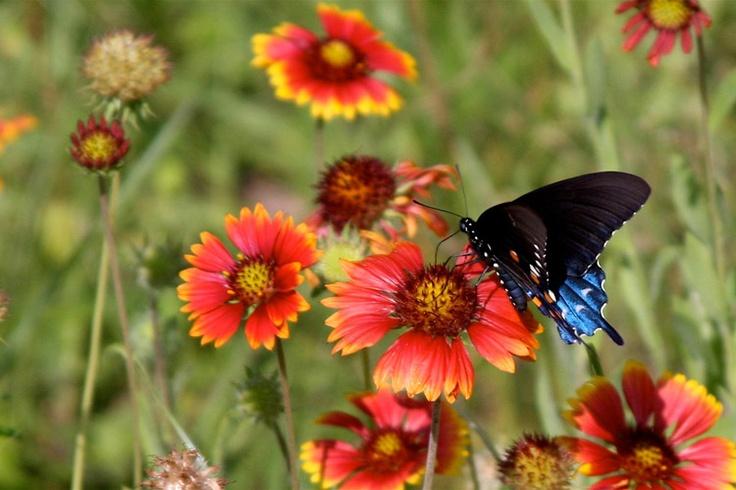 27 best images about florida native plants on pinterest