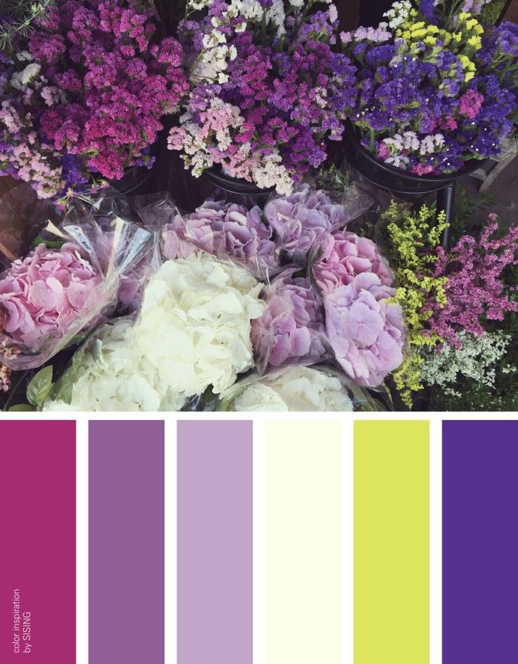 [color inspiration & photo by SISING] purple, violet, flower, sea lavender, statice, scent, fragrance