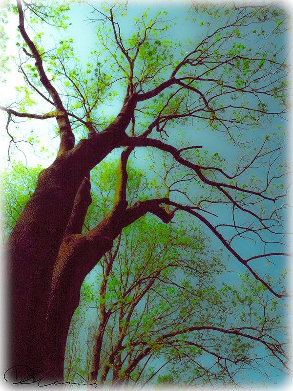 Dvoka Sarka Tree | by Munns Foto