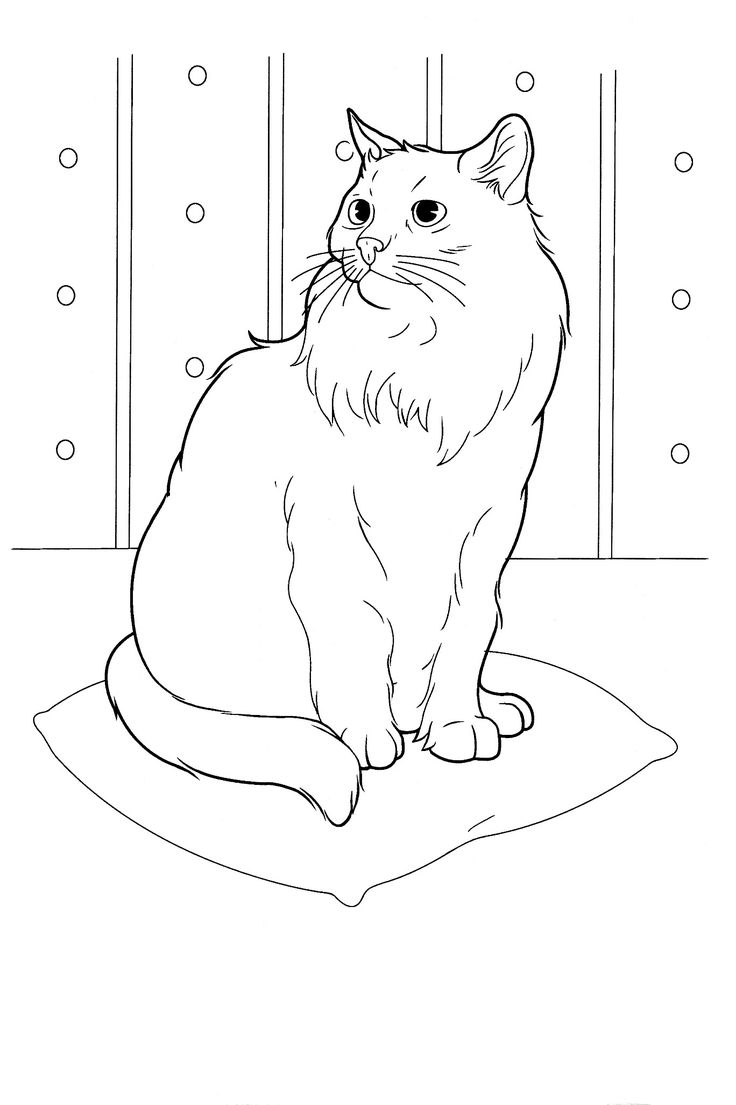 cats_ 16 Cats coloring pages for teens and adults