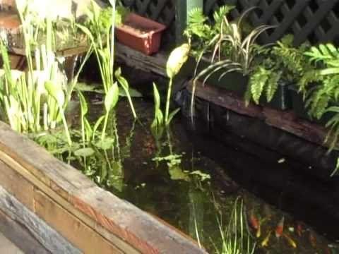 104 best images about koi pond on pinterest raised pond for Settlement tank for koi pond