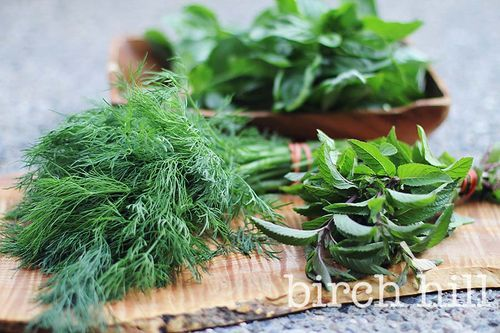 fresh organic herbs from FarmBound http://www.snickerdoodles.ca/snickerdoodle_life/2015/08/summer-work-shots.html