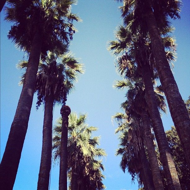 Palm trees in the center of Athens..