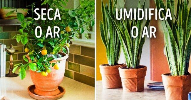 10plantas para ter ummicroclima perfeito dentro decasa