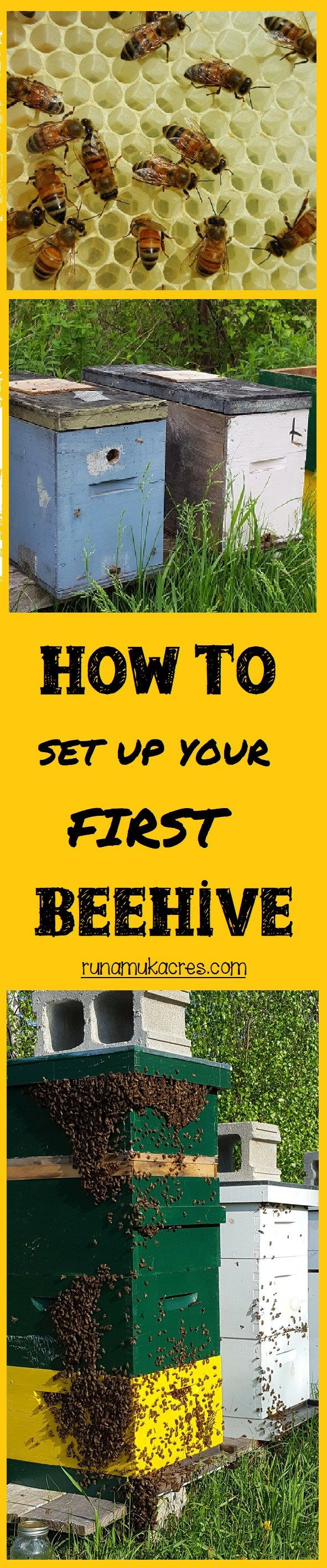 How to Set up Your First Beehive: from Runamuk Apiaries in Maine! Learn how to get started with bees, how to purchase honeybees, the difference between a package or a nucleus colony, where to site your apiary, and more!