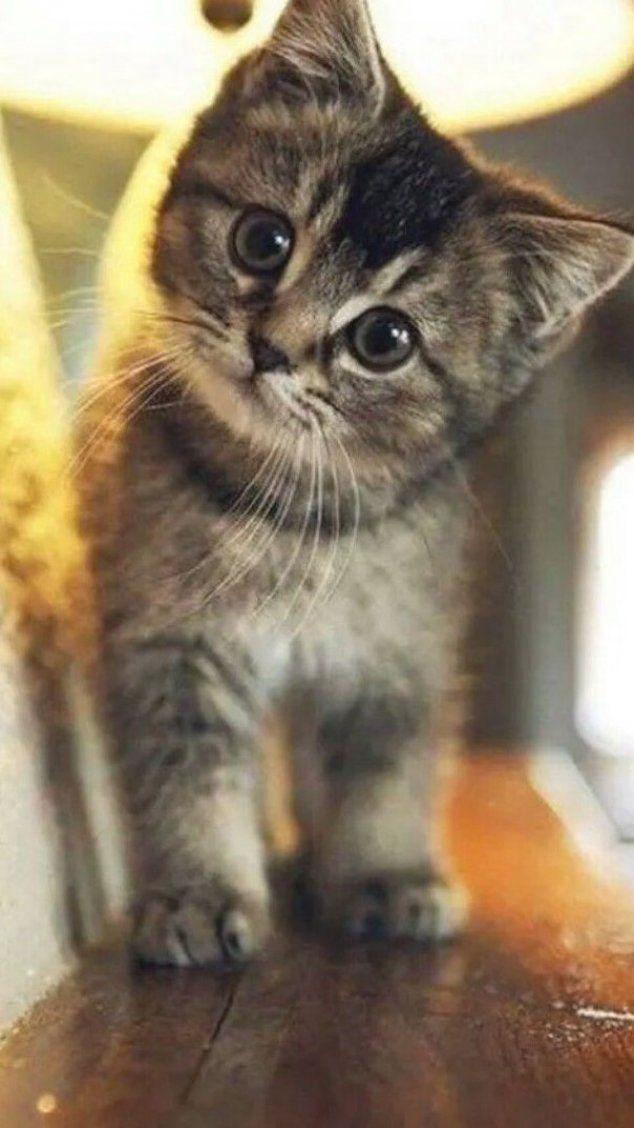 Cute Cat Wallpaper Hd Cute Little Kittens Cute Cat Wallpaper Cute Baby Cats
