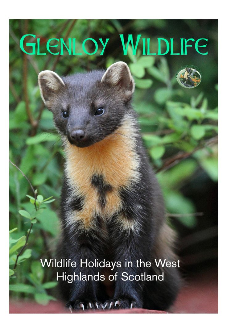 Spectacular A photo of Glenloy Wildlife