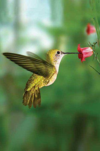 Hummingbird Blank Journal Nodin Press Blank Journals: Amazon.es: Kiyoshi Takahas Segundo: Hogar