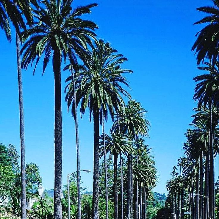 Another reason to love southern california palm tree