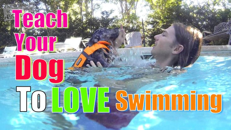 http://www.atvnetworks.com/ How to Teach Your Dog to Love WATER & SWIMMING