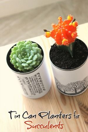 Tutorial: Tin Can Planters for Succulents ~:: Eliza K Prints ::~ Create beautiful, inexpensive planters for your succulents or small plants using this DIY tutorial. These planters were made from old tin cans destined for the trash heap! Use them as centerpieces for a wedding or holiday table. They