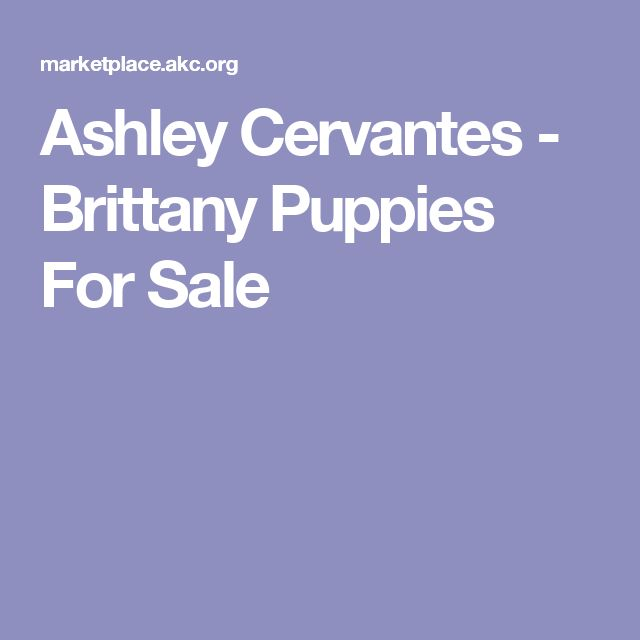 Ashley Cervantes - Brittany Puppies For Sale