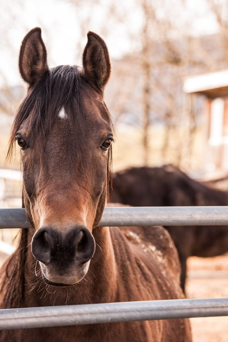 Brown Horse Beside Gray Metal Bar