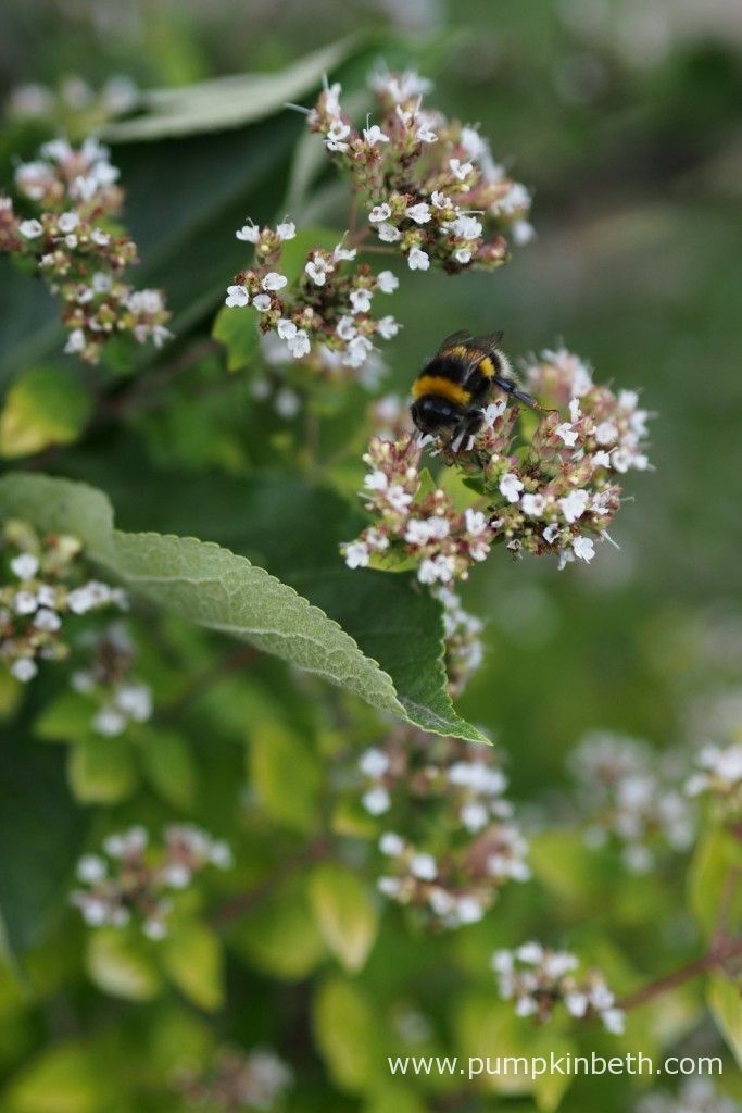 Many herbs, such as Chives, Marjoram, Oregano, Thyme and Rosemary, to name just a few, are very beneficial to bees. Herbs are beneficial to gardeners too.