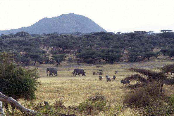 Survivor: Africa  Elephants walk through the Kenyan bush where SURVIVOR: AFRICA was produced.