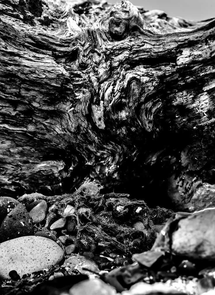 The Raw Wood by Gautam Gupta on 500px