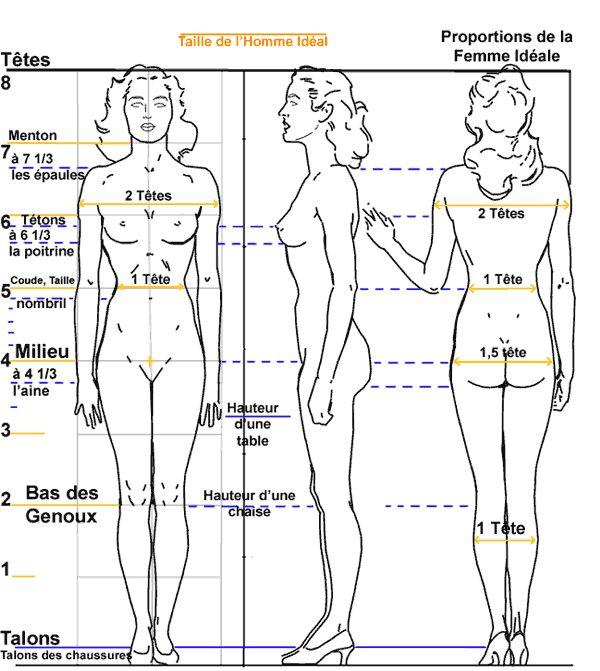 proportions corps humain - Recherche Google