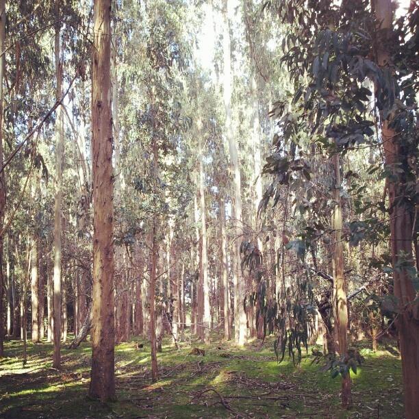 """""""El bosque de Endor"""""""