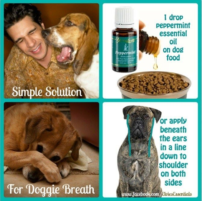 Young Living Essential Oils: Peppermint for Dog Breath www.theoildropper.com/debchausky