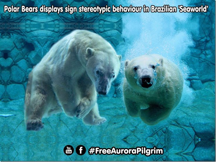 Mural Animal: Polar Bears SOS