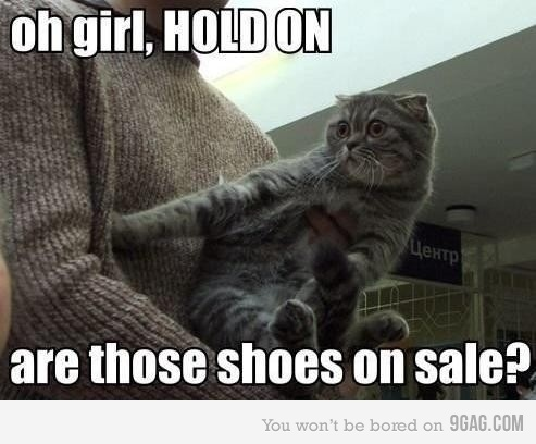 .: Cats Shoes, Holding On, Funnies Captions, Shoes Sales, Lol Cats, Super Funnies, Funnies Stuff, Black Friday, Funnies Cats Pictures