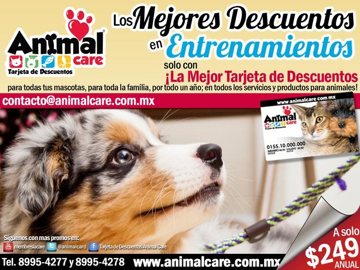 EN ENTRENAMIENTO al presentar la TARJETA DE DESCUENTOS ANIMAL CARE obtienes los mejores descuentos del 10% al 50% en todos los servicios y productos para mascotas, con toda la RED de PROVEEDORES. Checa todos los descuentos en www.animalcare.co... Llámanos al 8995-4277 y 8995-4278 Escribenos a contacto@animalcare.com.mx