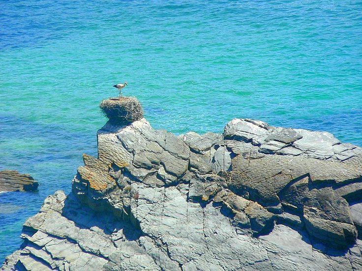 """El Alentejo, un paraíso natural en la Costa Vicentina Via El Rincon del Trotamundos Claro, esto lo hacen posible la frialdad y bravura de las aguas atlánticas, los frecuentes vientos (que no hemos padecido) y el régimen de protección del Parque Natural del sudoeste alentejano y costa vicentina. Se promociona el parque además de con las """"cigüeñas en el mar"""" con la existencia de águila pescadora o nutrias que pescan en el mar, que no hemos visto… #Portugal"""
