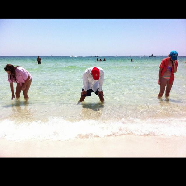 Shell Island - Florida