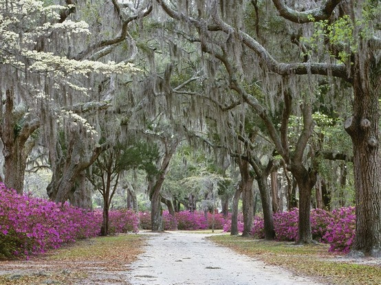#ridecolorfully Savannah, GA amongst old oaks dripping with spanish moss