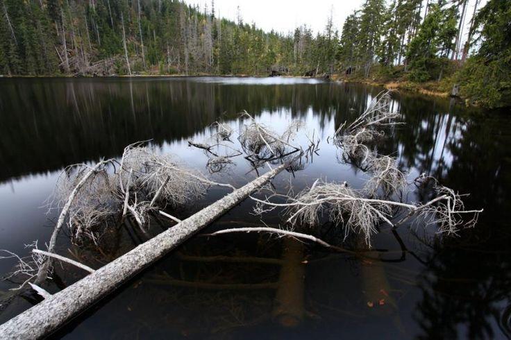 Prášilské jezero, Šumava