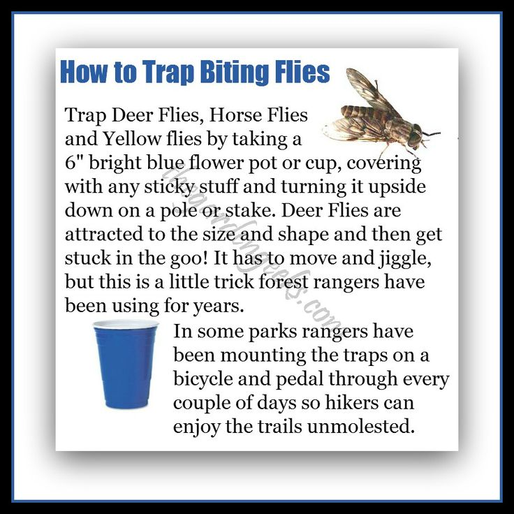 How to trap deer flies, horse flies and yellow flies.  Who knew!!!