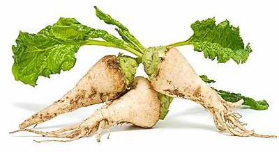 Sugar beet industry converts to 100% GMO, disallows non-GMO option