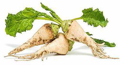 Sugar beet industry converts to 100% GMO, disallows non-GMO option